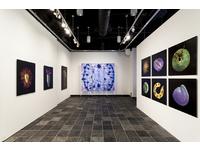 [http://ualresearchonline.arts.ac.uk/13019/1.hasmediumThumbnailVersion/Kesseler_Worlds%20Within_Miller%20Gallery_01.jpg]