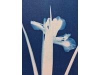 [http://ualresearchonline.arts.ac.uk/13088/14.hasmediumThumbnailVersion/GENUS-015.jpg]