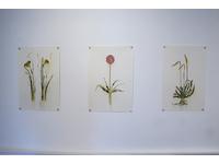 [http://ualresearchonline.arts.ac.uk/13088/15.hasmediumThumbnailVersion/GENUS-017.jpg]