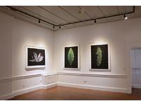 [http://ualresearchonline.arts.ac.uk/13088/3.hasmediumThumbnailVersion/GENUS-003.jpg]