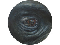 [http://ualresearchonline.arts.ac.uk/2242/3.hasmediumThumbnailVersion/Gorilla.jpg]
