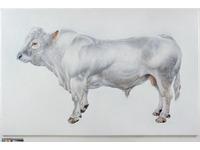 [http://ualresearchonline.arts.ac.uk/2288/1.hasmediumThumbnailVersion/Maerdy_Tally.jpg]