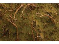[http://ualresearchonline.arts.ac.uk/399/8.hasmediumThumbnailVersion/Kiwi_skin_-_Actinidia_deliciosa_a.jpg]
