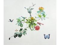 [http://ualresearchonline.arts.ac.uk/4311/2.hasmediumThumbnailVersion/11._Morpho_Menelaus_PlantRO.jpg]