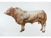 [http://ualresearchonline.arts.ac.uk/6424/1.hasmediumThumbnailVersion/Duncombe_Aga_KhanRO.jpg]
