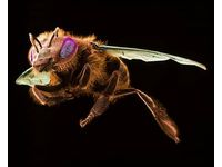 [http://ualresearchonline.arts.ac.uk/7164/2.hasmediumThumbnailVersion/Kesseler_Invisible-Garden-exhibition_honey_bee.jpg]