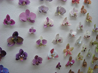 [http://ualresearchonline.arts.ac.uk/7262/1.hasmediumThumbnailVersion/an_orchid_collection_2012.jpg]