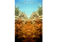 [http://ualresearchonline.arts.ac.uk/7465/16.hasmediumThumbnailVersion/D%C3%B6ppelganger-_Yonder._Photographic_Print_120_cm_x_150_cm._2003.png]