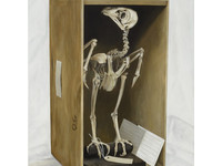 [http://ualresearchonline.arts.ac.uk/9334/77.hasmediumThumbnailVersion/Box-Bird-c-Mark-Fairnington-Peter-White-FXP-Photography.jpg]