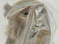 [http://ualresearchonline.arts.ac.uk/9334/78.hasmediumThumbnailVersion/Face-Monkey-c-Mark-Fairnington-Peter-White-FXP-Photography.jpg]