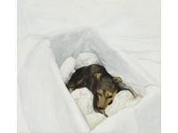 [http://ualresearchonline.arts.ac.uk/9334/84.hasmediumThumbnailVersion/Nest-c-Mark-Fairninton-Peter-White-FXP-Photography.jpg]