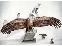[http://ualresearchonline.arts.ac.uk/9334/85.hasmediumThumbnailVersion/The-Brotherhood-c-Mark-Fairninton-Peter-White-FXP-Photography.jpg]